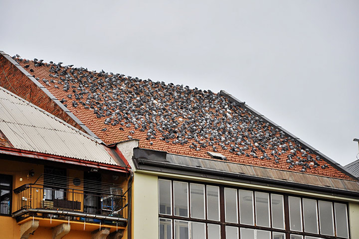 A2B Pest Control are able to install spikes to deter birds from roofs in North Harrow.