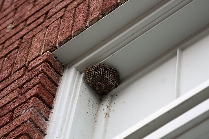 We provide a wasp nest removal service for domestic and commercial properties in North Harrow.